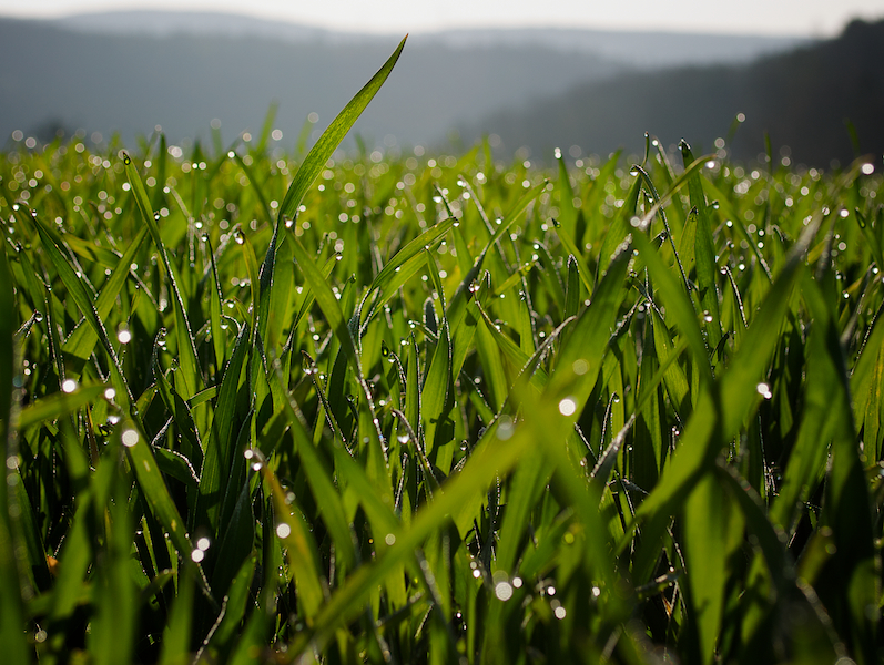 Can Smart Sprinklers Save Your Lawn and Your Money?